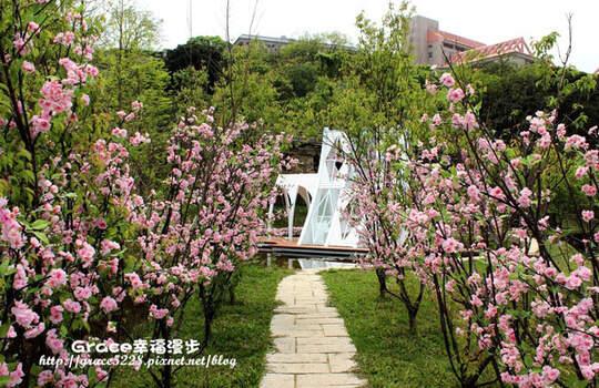 是日本還是歐洲?穿過櫻花步道,看見的是唯美歐洲小教堂!'