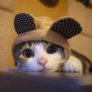 可愛的貓貓 圖像