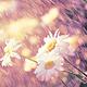創作者 花兒的小花園 的頭像