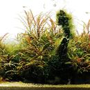 aquaforest 圖像