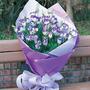 波斯菊愛紫桔梗