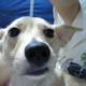 創作者 dogbreeder 的頭像
