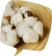 創作者 和諧生活有機棉 的頭像