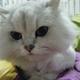 創作者 宅貓 的頭像