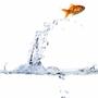 juicefish