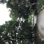 kaoyu
