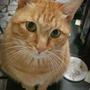 lovecat2012