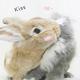 創作者 兔狗仔~小C 的頭像