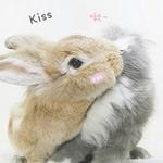 兔狗仔~小C