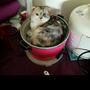 電鍋貓食譜