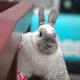 創作者 蘭小兔 的頭像