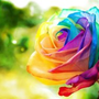 彩虹色的玫瑰