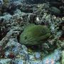 shinyfish