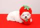 創作者 草莓狗 的頭像