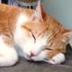 創作者 貓農的異想天地 的頭像